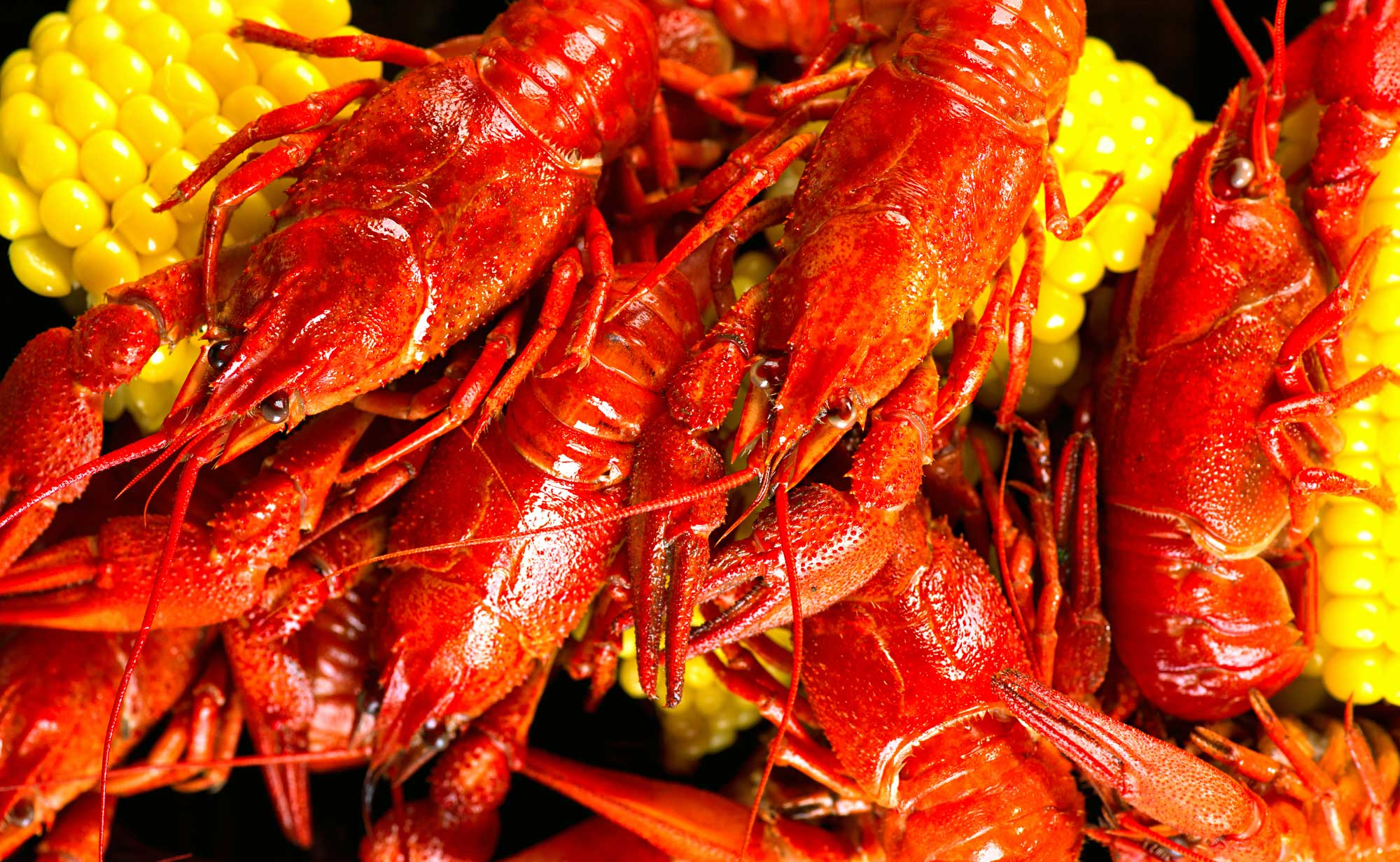 Chuck Wagon Crawfish: Fresh Shrimp & Crawfish in Shreveport, LA